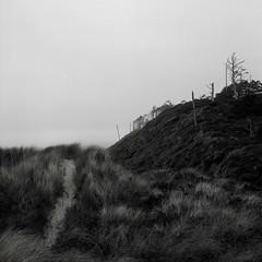 Bayocean Spit, Oregon Coast (austin granger) Tags: bayocean oregon path dunegrass eagles deadtrees square film gf670
