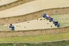 _Y2U9997.0617.Chế Cu Nha.Mù Cang Chải.Yên Bái (hoanglongphoto) Tags: asia asian vietnam northvietnam northwestvietnam life people dailylife terraces terracedfields transplantingseason sowingseeds lifeatvietnam lifeatvietnammountainous hmongpeople cultivation canon flanksmountain canoneos1dx canonef500mmf4isiiusmlens tâybắc yênbái mùcangchải chếcunha ruộngbậcthang mùacấy đổnước ruộngbậcthangmùcangchải mùacấymùcangchải mùcangchảimùađổnước người cuộcsống đờithường cuộcsốngvùngcao cầycấy sườnnúi women womens phụnữ hmongwomen phụnữhmông