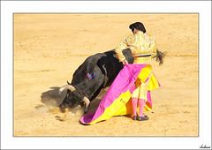 Una media en la vida y una vida a medias (Tauromaquia) (V- strom) Tags: tauromaquia bullfighter bullfighting torero amarillo yelow rosa pink toro bull sol sun recuerdo memory nikon nikon2470 nikon105mm capote cape