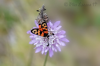 La flor y el insecto.