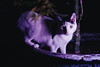 Kirk (BurlapZack) Tags: pentaxk1 pentaxfalimited43mmf19 vscofilm pack01 yongnuoyn360 ledwand dallastx addisontx experiment portrait cat kitty bokeh magenta pink pottedplant plant explore exploration adventure meow catto whiskers petportrait