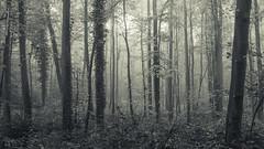 Autumn Forest (Netsrak) Tags: eu europa europe forst nebel wald fog forest mist woods eifel rheinbach nordrheinwestfalen deutschland de