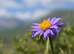 (Gianpaolo Bottin) Tags: closeup france rhonealps montcenis nature flower