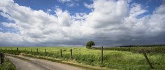a promise of summer days to come (HHH Honey) Tags: sonya7rii tokina2035mmlens landscape fence fences fencefriday clouds wiltshire marlborough road crops tree