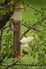 WhiteBirdWpgBeach (catherinesproat) Tags: birds winnipegbeach matlock interlake lakewinnipeg manitoba yourmanitoba exploremanitoba canada150 manitoba411 narcitywinnipeg standrews