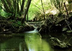 River (- Crupi Giorgio (official)) Tags: italy liguria genova lake light longexposure nature trees water river waterfall wood canon canoneos7d sigma sigma1020mm landscape