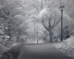 Woodland Fantasy (Glenn D Reay) Tags: trees lights path mono infrared 720nm olympusep1 zuiko1442ii ethereal fantasy surreal glennreay