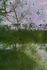 Elemental #28 - Algae (hedshot) Tags: emailedin n95 cameraphone bymichaelrawling