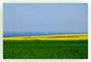 Rapsfeld an der Ostseeküste (K.Rahn) Tags: acker ausblick aussicht baum bio biodiesel blau blumen blumenwiese deutschland energie erneuerbare feld feldweg frühling gelb grün himmel küste landscape landschaft landwirtschaft ländlich nachhaltig nachhaltigkeit natur ostsee ostseeküste raps rapsfeld rapsöl schleswigholstein segelboote umweltschutz wiese zukunft ökologie öl