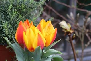 bloem (1)