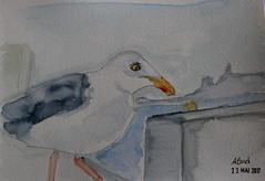 23- A Bird (cheesemoopsie) Tags: aquarelle watercolor croquis sketch