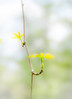Spring.jpg (Klaus Ressmann) Tags: klaus ressmann branch hheviz nature nikon spring bud design flcnat softtones klausressmann