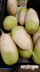 Korean radish (Tim Evanson) Tags: raphanusraphanistrumsubspsativus koreanradish radish mu joseonmu