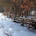 snowy cedar fence