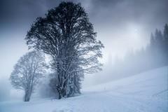 Haute Savoie, Mont-Blanc, 10 (Patrick.Raymond (3M views)) Tags: alpes haute savoie megève montagne neige brouillard gel froid hiver arbre bois foret hdr nikon nikonflickraward beautifulphoto