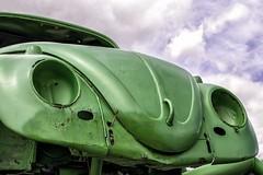 Leptodirus Beetle (Matthew P Sharp) Tags: bug vw car vwbug themechanics 50mm 50mm14 canon 80d