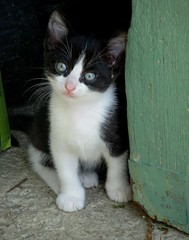 Junior (b.four) Tags: chat chaton cat kitten gatto gattino cagnessurmer alpesmaritimes ruby3 ruby10 ruby15 ruby20