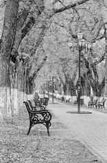 The alley... (lupuszka) Tags: târgumureș județulmureș romania alley trees tree bench urban city cityscape analog film fuji neopan acros 100 tetenal transylvania