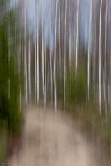 forest road (sami kuosmanen) Tags: kuusankoski kouvola road tie finland forest koivu birch metsä taivas tree trees suomi sky luonto light landscape long exposure europe photography puu pitkä valotus valo värikäs colorful spring hiekka sand gravel back small liike intentionalcameramovement icm creative art north nature