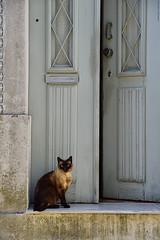 The Guardian. (Carlos Arriero) Tags: aveiro portugal theguardian elguardián gato cat nikon d800e tamron 2470mm 2470f28 composición composition carlosarriero puerta door felino animal urban street calle