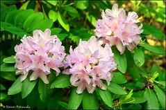 DSC_8822 (facebook.com/DorotaOstrowskaFoto) Tags: ogródbotaniczny kwiaty powsin warszawa