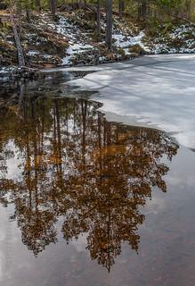 Early Spring at Stavsjøen II