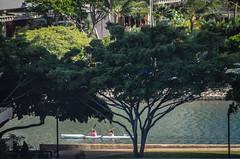 Rowing Ladies (misterperturbed) Tags: hawaii honolulu rowing