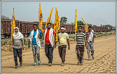 On the march (david.hayes77) Tags: reengus ringas rajasthan india govindgarh 2016 pilgrims humanity people festival hindufestival mg metregauge wdg4d 70301 indianrailways gentlemen flagbearers freight