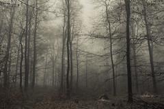 In the Woods (Netsrak) Tags: baum bäume eu europa europe forst januar january landschaft natur nebel wald fog forest landscape mist nature tree trees winter woods rheinbach nordrheinwestfalen deutschland de eifel