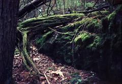 Ektar100 (13).jpg (DzmitryParul) Tags: naturecoloranalogphoto kodakektar100 olympus35sp burlingtonvt forest vermont rolleic4138c