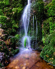 Mossy micro waterfall over leaf.jpg (sfowlerphotos) Tags: water fuji watermovement xt2 landscape 14mm waterfall rosebery tasmania australia au