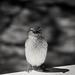 Little+Sparrow