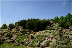 DSC_8852 (facebook.com/DorotaOstrowskaFoto) Tags: ogródbotaniczny kwiaty powsin warszawa