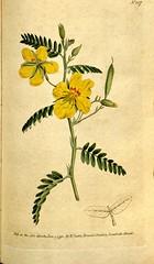 Anglų lietuvių žodynas. Žodis cassia fasciculata reiškia kasijos fasciculata lietuviškai.