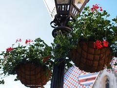 St Marko's square