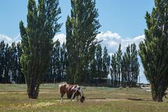 El Calafate, Argentina (silkylemur) Tags: 24105mm canon canonef canonef24105mmf4l canonef24105mmf4lisusm canonef24105mmf4lisusmlens canoneos canoneos6d eflens efmount fullframe llens lens zoomlens キャノン elcalafate argentina argentinianpatagonia southamerica latinamerica landscape landscapephotography landscapes santacruz ar