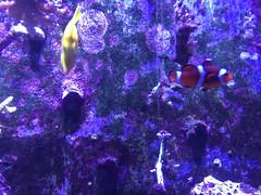 (eyair) Tags: ashmashashmash uk london england dulwich hornimanmuseum aquarium fish