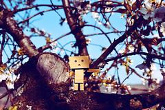 Danbo (6) @danbo/данбо2 (Robert Krstevski) Tags: danbo danboard danbomacedonia danbostory danboamazon danborou 365danbo nikond3300 nikon nikoneurope revoltech robot robertkrstevskiblogspotcom robertkrstevski