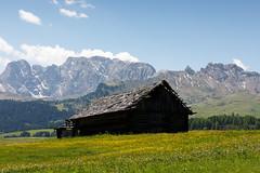 Alpe di Siusi (Guido Barberis) Tags: dolomiti alpe di fiori flowers alps alpi montagna berg mountain seiser alm alto adige siusi