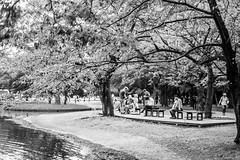 By the Pond (Jesús Simeón) Tags: kyoto yoyogikoen yoyogipark shibuyaku tōkyōto japan pond crows sundaymorning blackandwhite blackwhite monochrome streetphotography
