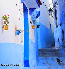 Alley in Chefchaouen (Nicolay Abril) Tags: شفشاو الشاون تطوان المغرب أفريقيا العربي chauen xauen chefchauen tangiertetouan tétouan tangertetouan tangertetuan tetuán tetuanprovince marruecos marocco morocco maroc marokko maghreb magreb africa afrika afrique chefchaouen chaouen xaouen