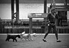 B&W & In-Between (the mindful fox) Tags: dogs chiens hunde perros bw grey monochrome dogwalker
