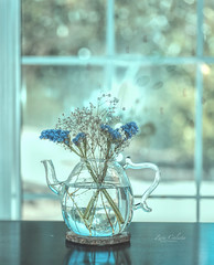 Monday morning blues (z_a_r_a___c_a_l_i_s_t_a) Tags: light still blue dream dreamy flowers vase pastel life indoors window nikon d750 52 2027