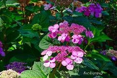 Mercer Arboretum and Botanic Gardens ! (backup1940) Tags: mercer arboretumandbotanicgardens houstontexas sony backup1940 flowers garden