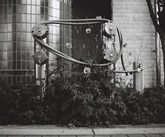ヨーヨー三角蜷局 (Yorozuna Yūri / 萬名 游鯏(ヨロズナ)) Tags: アナログ写真 analogphotography フィルム写真 filmscanning フィルムスキャニング フィルムスキャン モノクロ 白黒 monochrome blackandwhite fujifilmneopan100acros mamiyarb67professionals mamiyarb67 mamiyasekorc138f90mm 曙橋 akebonobashi 新宿区 shinjukuward 東京都 tokyo japan 若松河田 wakamatsukawada 余丁町 yochomachi 送水口 watersupplypipeinlet watersupplypipeoutlet watersupplyoutlet watersupplyinlet wastewaterport ホース hose plant 植物 花 flower 水道