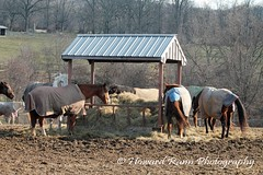 Chester County Countryside  (46) (Framemaker 2014) Tags: ryerss horse farm pottstown pennsylvania chester county united states america