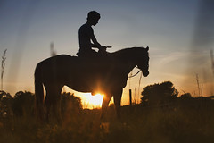 IMG_3593 (Mary Anne Morgan) Tags: horses silhouette