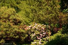 DSC_8798 (facebook.com/DorotaOstrowskaFoto) Tags: ogródbotaniczny kwiaty powsin warszawa