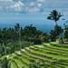 Rice terrasses in Bali