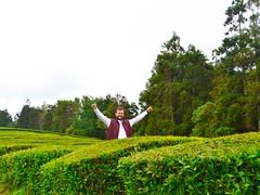 buddy! (ekelly80) Tags: azores portugal sãomiguel may2017 teaplantation tea greentea chágorreana green rows tealeaves leaves field